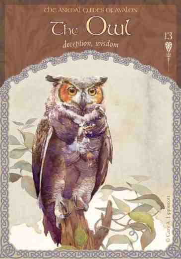 13-owl