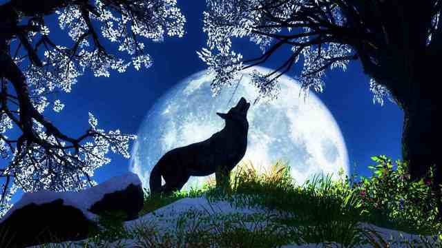 Image Source: http://activerain.trulia.com/blogsview/4569099/january-2015-full-moon-is-the-wolf-moon