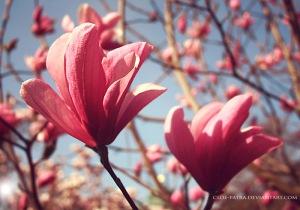 Image Source: http://cloe-patra.deviantart.com/