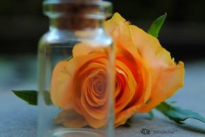 Image Source: http://bluernn.deviantart.com/