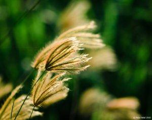 Image Source: http://eyesweb1.deviantart.com/